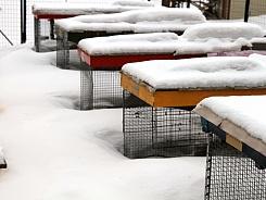 Murkšķi devušies ziemas guļā